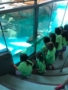 field_trip_to_the_aquarium_creative_kids_childcare_centers_mahopac-338x450