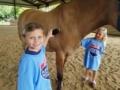 field_trip_to_visit_horses_cadence_academy_preschool_wilmington_nc-600x450