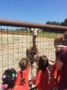 giraffe_encounter_at_zoo_cadence_academy_preschool_steele_creek_charlotte_nc-333x450