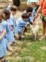 petting_a_goat_at_carolina_kids_child_development_center_rock_hill_sc-338x450