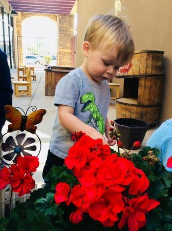 preschool_boy_admiring_flowers_at_phoenix_childrens_academy_private_preschool_chandler_heights-336x450