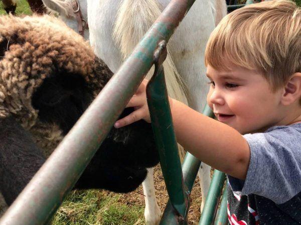 preschool_boy_petting_sheep_at_cadence_academy_preschool_rogers_ar-600x450