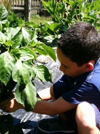 preschool_boy_picking_a_pepper_creative_kids_childcare_centers_mahopac-600x450