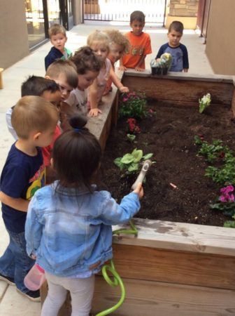 preschool_children_working_in_the_garden_phoenix_childrens_academy_private_preschool_chandler_heights-336x450