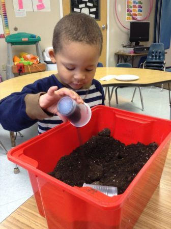 preschool_gardening_activity_at_cadence_academy_collegeville_pa-336x450
