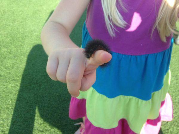 preschool_girl_holding_caterpillar_canterbury_academy_at_prairie_ridge_olathe_ks-600x450