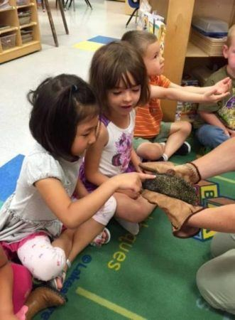 preschool_girl_petting_a_hedgehog_at_cadence_academy_preschool_broomfield_co-331x450