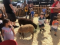preschool_petting_zoo_at_phoenix_childrens_academy_private_preschool_surprise_az-600x450