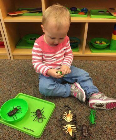 preschooler_playing_with_plastic_bugs_canterbury_academy_at_prairie_ridge_olathe_ks-371x450