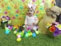 toddler_easter_eggs_at_cadence_academy_preschool_rogers_ar-600x450