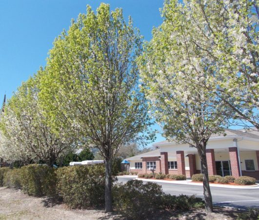 trees_outside_of_cadence_academy_preschool_wilmington_nc-531x450