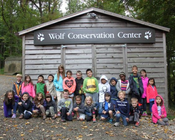 trip_to_wolf_conservation_center_cadence_academy_preschool_ridgefield_ct-563x450