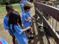 summer_camp_field_trip_to_petting_zoo_winwood_childrens_center_south_riding_va-600x450